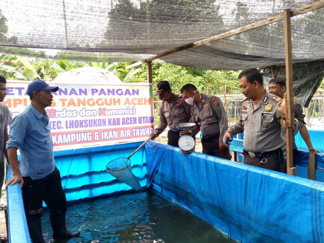 Dukung Ketahanan Pangan, Polres Aceh Utara Panen Lele di Kampung Tangguh